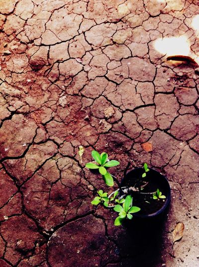 Our school yard: crack soil on dry season. TetumBunaya IPhoneography