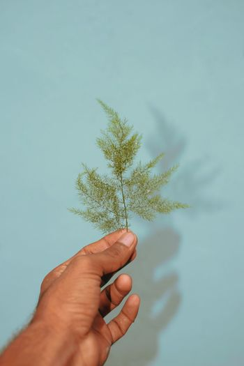 Human Hand Tree Holding Snowflake Pinaceae Flower Leaf Summer Body Part Hand Personal Perspective Coniferous Tree Blooming Low Section Pine Wood Forest Fire Evergreen Tree Needle Cropped Plant Part Glade Deciduous Tree Ski Jacket Pine Cone Austrian Culture Pine Tree Fir Tree Canvas Shoe Pine Woodland Needle - Plant Part