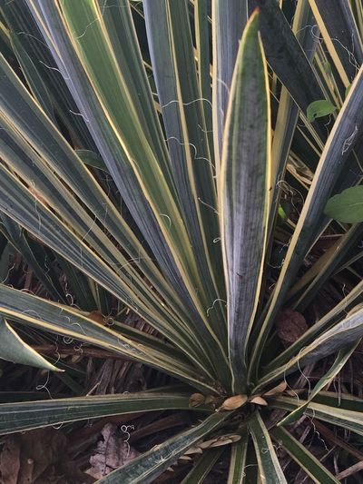 Plant Leaf Nature Beauty In Nature Outdoors Frond Beauty In Nature Blacksburg