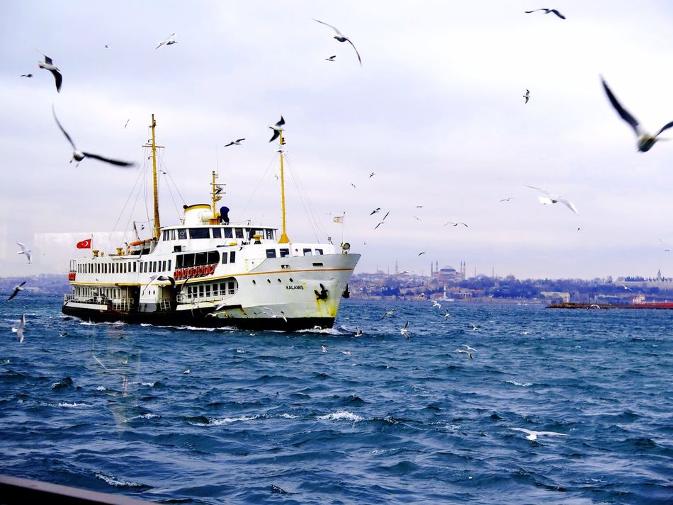 Bosphorus Seagulls Marmarasea Sea Lovefromturkey Boat Trip Holiday Vacation Waves Clouds Rain Wings Spread Wings SpreadYourWings Love Istanbul