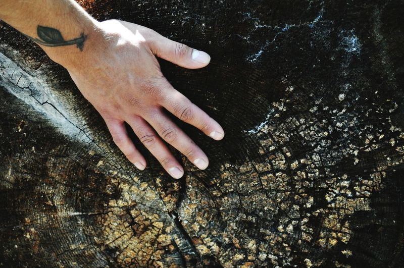 Cropped hand touching tree stump
