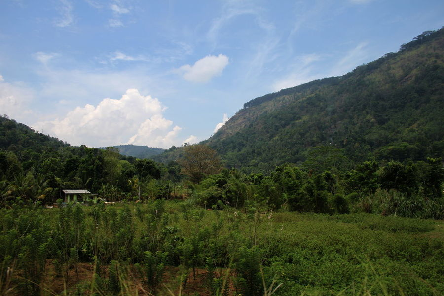 Beauty In Nature Cloud - Sky Countryside Day From The Train Grass Green Color Landscape Lush Foliage Mountain No People Sky Sri Lanka Tree