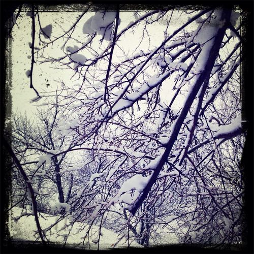 snow covered trees Snow Weather Trees Nature