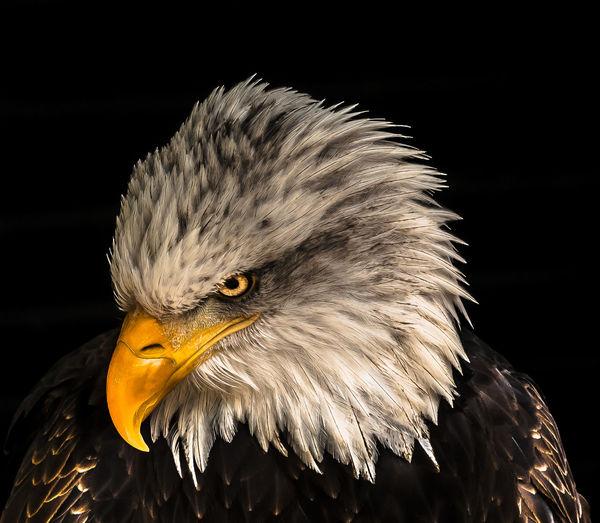 Bird Animal One
