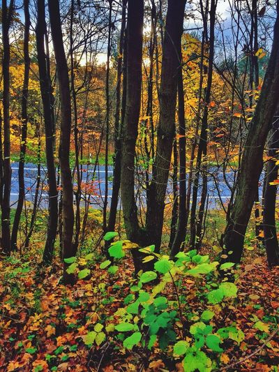 Autumn Colors EyeEm Nature Lover Eye4photography  Forest