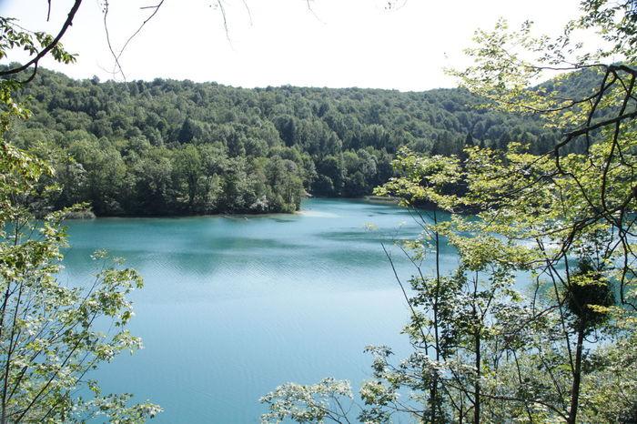 Sunshine Green Leaves First Eyeem Photo Best EyeEm Shot Best Eyeem Photo Nature Nice Day Water Kroatia Trees Traveling Blue Sky