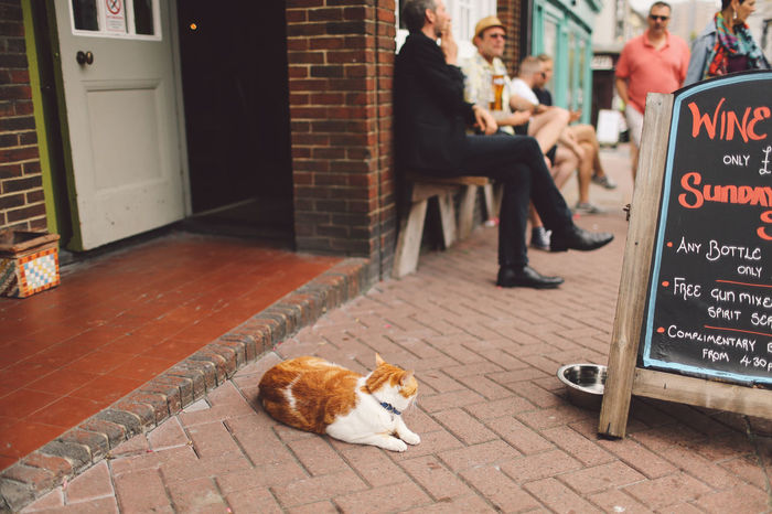 Brighton Casual Clothing Cat Day Flooring Leisure Activity Lifestyles Local Mammal Street Tile