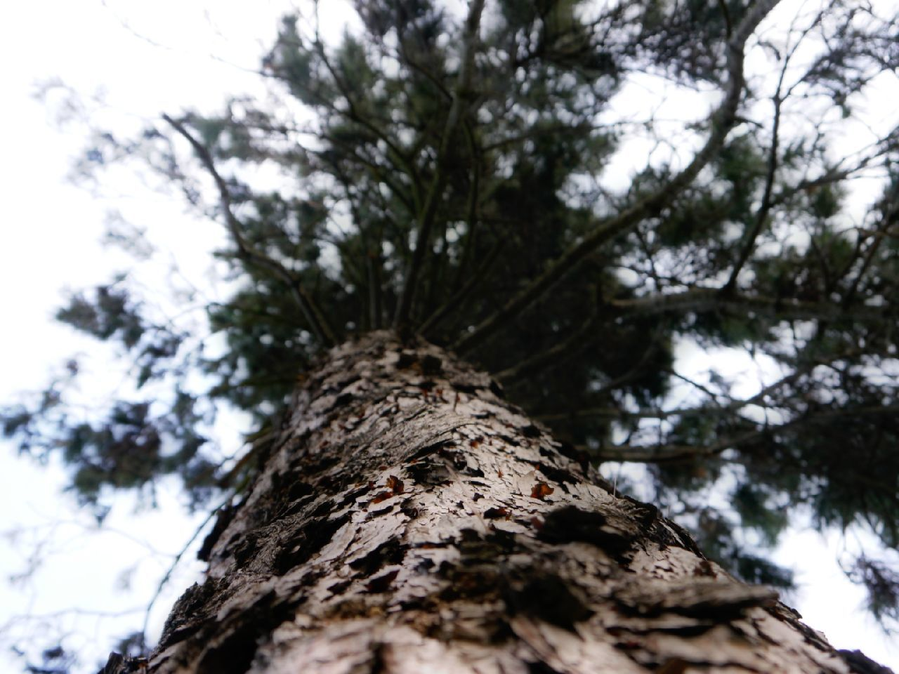 tree trunk, low angle view, tree, nature, day, growth, outdoors, rough, bark, textured, no people, branch, focus on foreground, forest, beauty in nature, close-up, sky, high