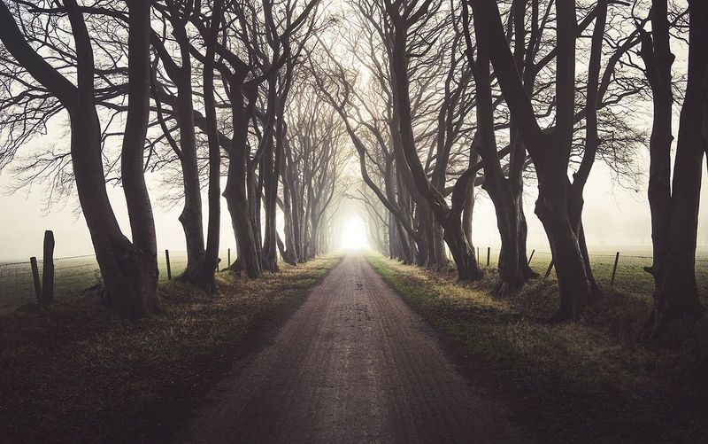 Follow the light Light Tree Tree_collection  Treescollection Fog Beauty In Nature The Way Forward Outdoors Nature Road Sunlight Landscape_photography