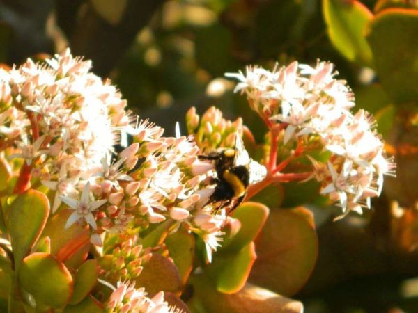 Flores Y Más Flores Plants And Flowers Naturaleza Flores Beautiful Flowers Plants 🌱 Natural Beauty Bee Abejorro