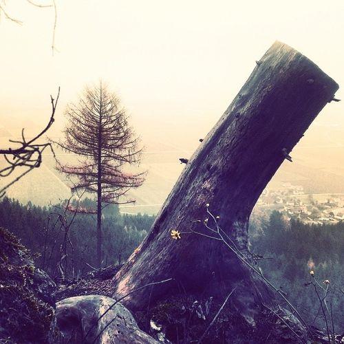 Woid BAM Wipfl HASHTAG samstag forrestgump fogy luft november aussicht föd