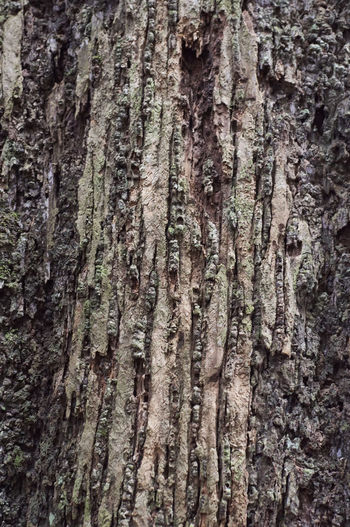 Backgrounds Bark Close-up Day Full Frame Growth Nature No People Outdoors Pattern Rough Textured  Tree Tree Trunk