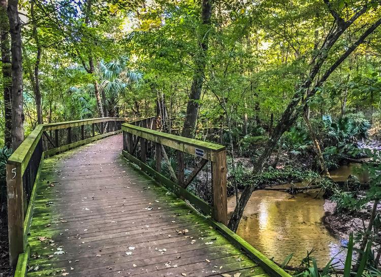 Creek Gainesville Hogtown Bridge Morning Light IPhoneography