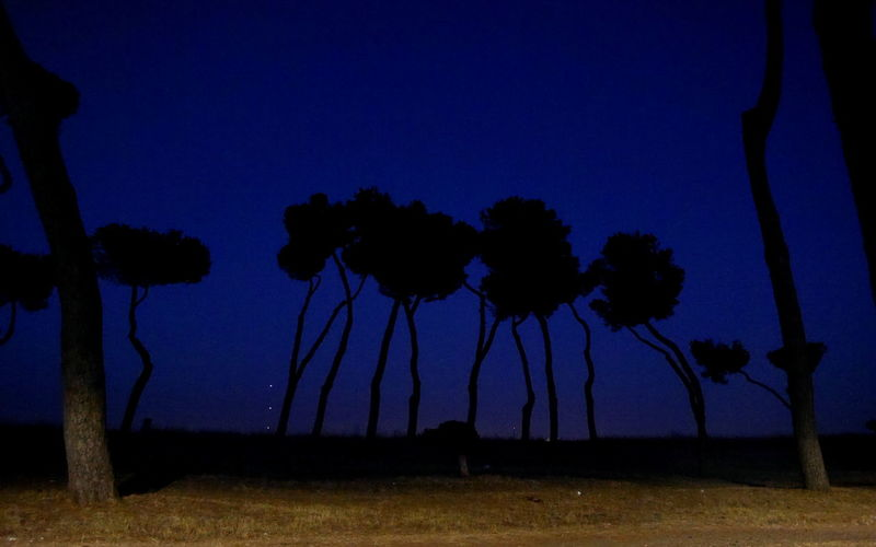 #Blue #Dark #italy Beauty In Nature Blue Clear Sky Field Growth Landscape Nature Night No People Outdoors Scenics Silhouette Sky Tranquil Scene Tranquility Tree Tree Trunk