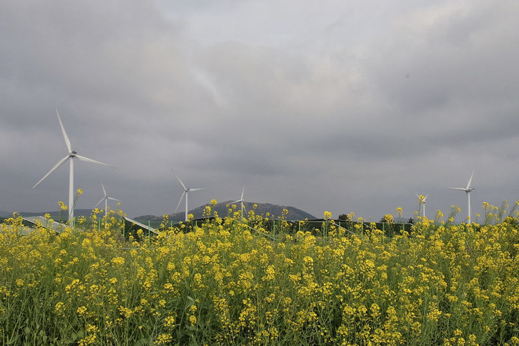 Fuel And Power Generation Turbine Wind Turbine Environmental Conservation Environment Renewable Energy Alternative Energy Beauty In Nature Yellow Sky Wind Power Field Flower Land Landscape Flowering Plant Nature Rural Scene Plant Cloud - Sky No People Outdoors Sustainable Resources