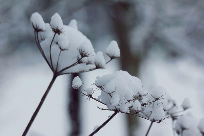 Winter Germany Snow Snowing