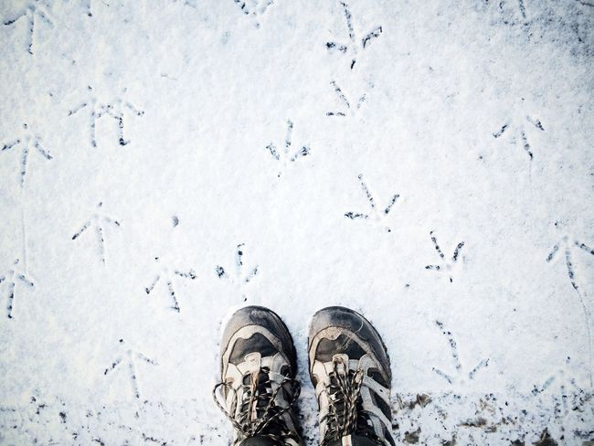 Bird tracks in the snow. Northumberland, England. Photo by Diana Pappas. Winter Personal Perspective Point Of View POV Shoe Selfie Snow Outdoors Nature Wildlife IPhone IPhoneography England Tracks Footprints Footprints In The Snow Feet Looking Down Hiking Boots Boots Walking Boots Winter Weather Bird Tracks