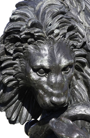 Sculpture of lion head isolated Sculpture Representation Statue Lion Vintage Detail No People Monochrome Architecture Outdoors Mammal Isolated HEAD