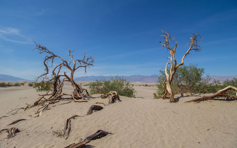 View of driftwood on beach against blue sky