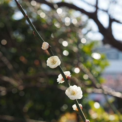 Nature Beauty In Nature Flower Plant Tree Flower Head Streetphotography Olympus Bokehlicious Bokehphotography Bokeh Taking Pictures Taking Photos Nature Eye Em Nature Lover