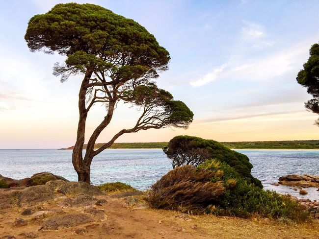 Indian Ocean Seascape with Coastal Trees Australia Western Australia Colorful Sky Twilight Dusk Bunker Bay Indian Ocean Sea Seascape Ocean View Ocean Water Sea And Sky Travel Beach Tourism Secluded Beach Tranquil Scene Peaceful View Peaceful Place Ocean Meditation Trees Coastal Coast Line  Nature