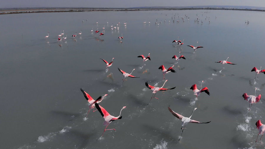 High angle view of birds flying over lake
