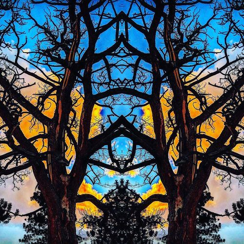 another Johnny worthless creation. Valley Of The Sun EyeEm Selects Fairplay EyeEmNewHere Anotherjohnnyworthlesscreation Tree Day Low Angle View Silhouette Sky No People Full Frame Clear Sky Outdoors EyeEm Ready