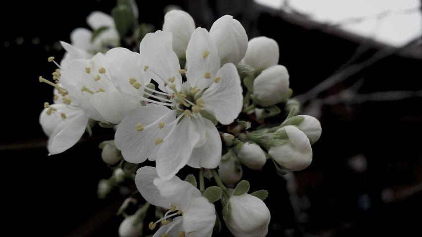 un abbraccio di primavera..