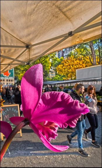 Orchid Flower @ Union Sq. Mkt. - 11/2/16 As I Sees It Blend In HDR W/ Layers EyeEm Macro Collection EyeEm StreetPhotography, NYC Fresh On Market November 2016 Full Length Leisure Activity Malephotographerofthemonth Nature Spring Like Day In November Togetherness Two People