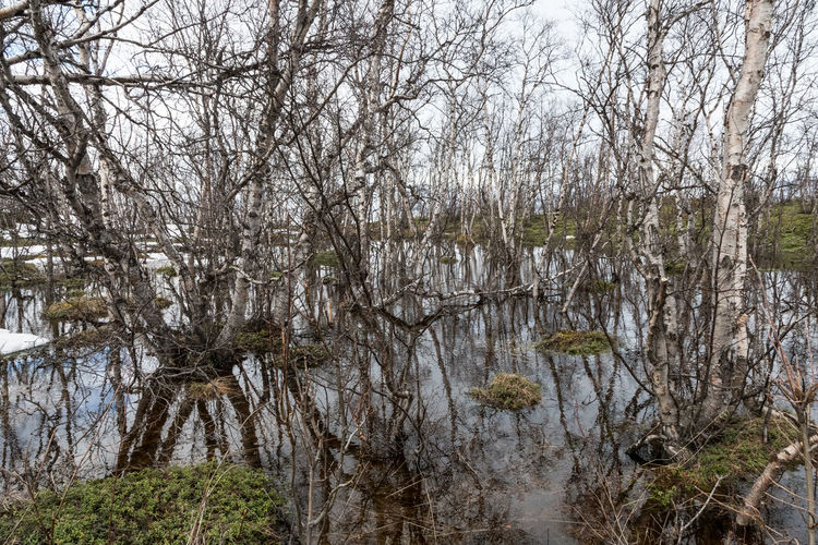 Plenty of water Abisko spring Abisko Bare Tree Beauty In Nature Branch Day Forest Grass Landscape Marsh Nature No People Outdoors River Scenics Sky Swamp Sweden Tranquil Scene Tranquility Tree Tree Trunk Water
