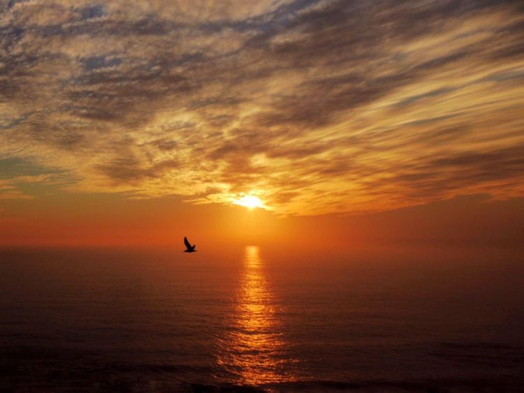 Sunset Beautiful Sunset Sunset_collection Sun Reflection Sunset And Sea Sunset And Clouds  Sunset_captures Sunsetlover Bird In Flight Sea View... Love It!  In Front Of Me Idyllic Clouds And Sky Clouds And Sky Variation Horizon Over Sea Enjoying The Sunset Beauty In Nature Reñaca Beach , Chile