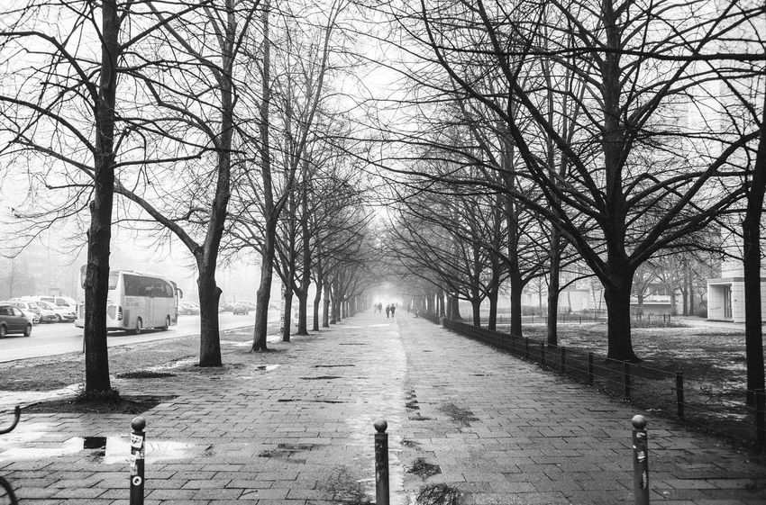 Alley Architecture Bare Tree Beauty In Nature Blackandwhite Blackandwhite Photography Branch Building Exterior City Day Foggy Foggy Day Foggy Morning Horizon Over Water Karl Marx Allee Nature No People Oneway Outdoors Sky Stralauer Allee The Way Forward Tranquility Tree Treelined