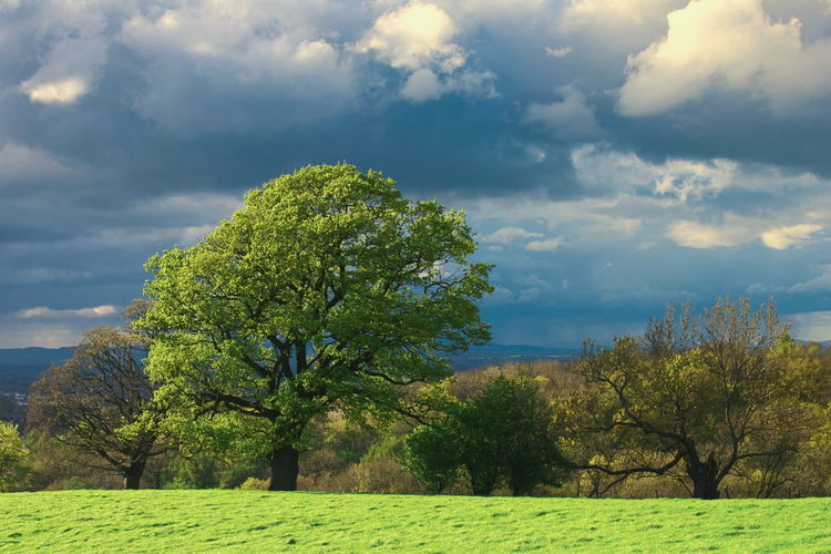 Cloudy day with sunny intervals at Charlton Kings Tree Blue Rural Scene Tree Area Sky Landscape Cloud - Sky Green Color Grass