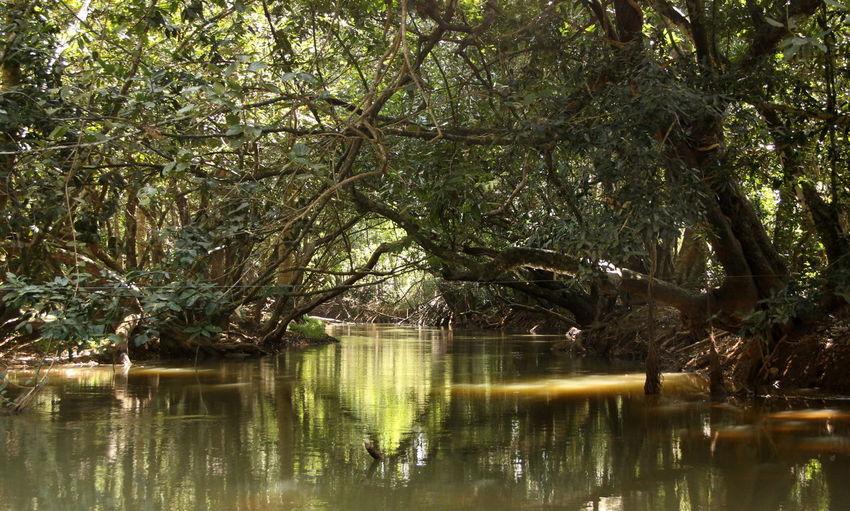 Forest Kerala