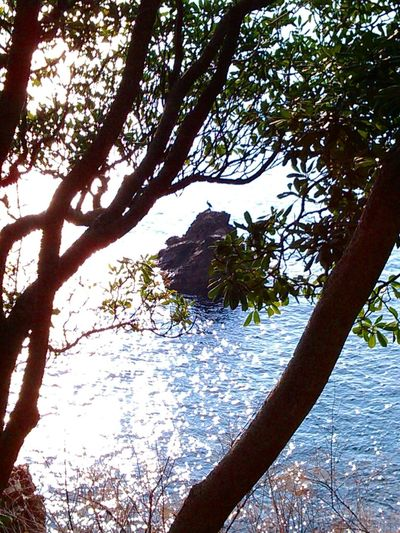 Sea Nature Tree Sun Reflection Cormorant Up The Rock