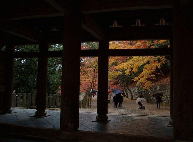 EyeEmNewHere Rain Shrine Shrine Of Japan Architectural Column Architecture Autumn Built Structure Mapple Nature Tree