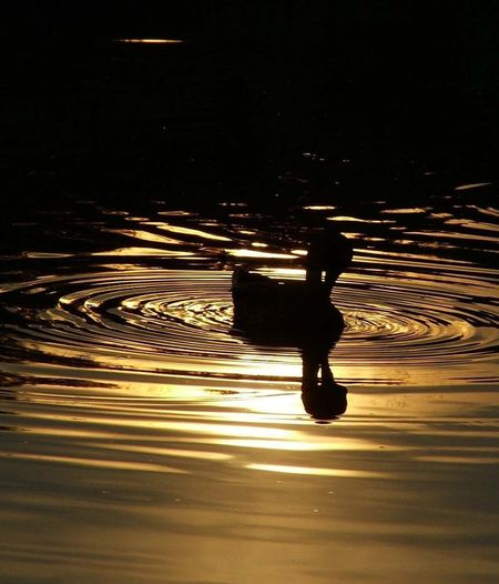 Relax Relaxing Moments Sunset Sunset_collection Sunset Silhouette Duck Duck At The Lake Reflection Reflection_collection Reflections In The Water Nature Water Beauty In Nature Naturephotography Nature Photography Beauty In Nature Beautiful Nature Animal_collection Animal Photography Animal Themes