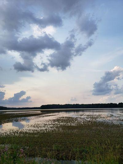 Water Bird Flower Sky Grass Cloud - Sky Landscape