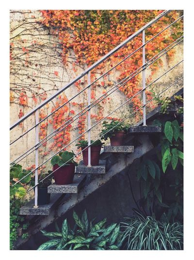 Rosario Argentina Arquitecture Autumn Colors Stairs Plants Green Color The Architect - 2018 EyeEm Awards