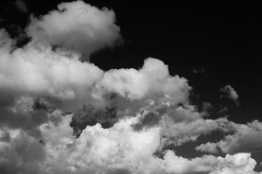 Screaming to the Wilderness and hearing nothing but Silenceback 🌚 Blackandwhite Monochrome Shades Of Grey Black Vs White Mountain Beauty In Nature Cloudy Sky Nature Tranquility Essence Clouds Cloudscape Look Up Above The Dome Turbulence Chaos Gaz Atmosphere Streetphotography Birds