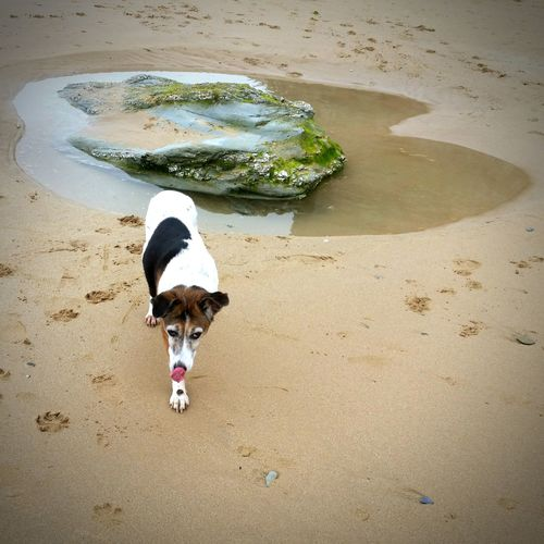 Investigating the rock pools of Watergate Bay. Watergate Bay Dogonthebeach Dogslife Beachphotography Rockpool