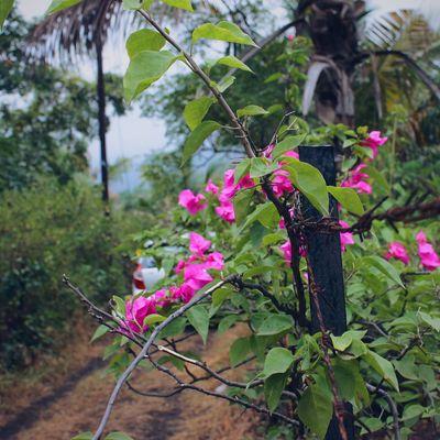 Relaxing Relaxing Flowers Mydubai