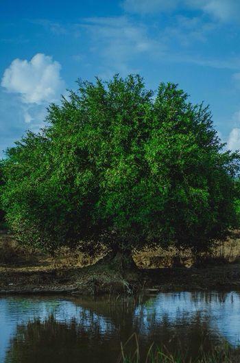 Tree Nature Plant Landscape