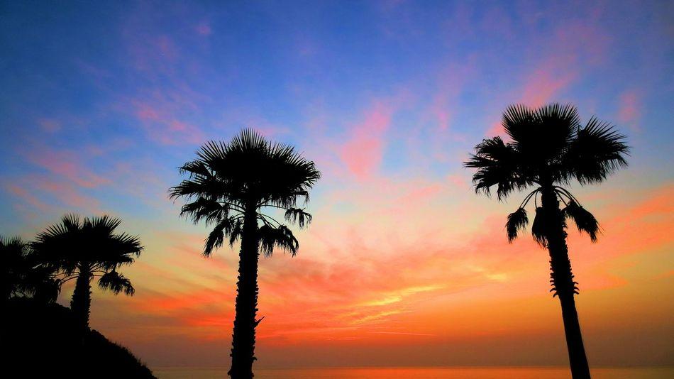 いつぞやのお気に入り Seaside ♪\(^o^)/ 夕日が綺麗だった♪(*'艸`)💕 My Best Place Sky And Trees シルエット部 Sunset Silhouettes Tree Silhouette Silhouette Sunset Silhouette Eyeem Best Shots - Silhouette EyeEm Best Edits