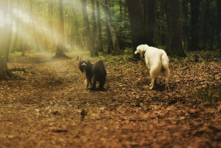 Dogs walking in a forest