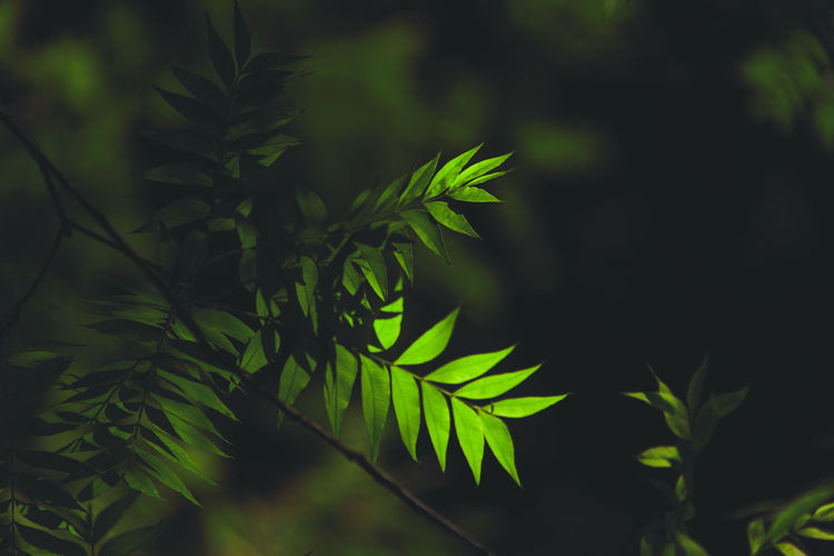Green Forest Leaf Green Color Plant Part Growth Plant Nature Close-up Beauty In Nature No People Focus On Foreground Day Outdoors Tree Selective Focus Fern Freshness Tranquility Sunlight Green Land Leaves Sunshine Shadow And Light Green Leaves Tree Tree Leaves Telescope Wild Wildflower Natural Beauty Natural Light Dreaming Green Growth Plant Part Greenery darkness and light Darkness Dark Silence Silence Of Nature Silent Moment
