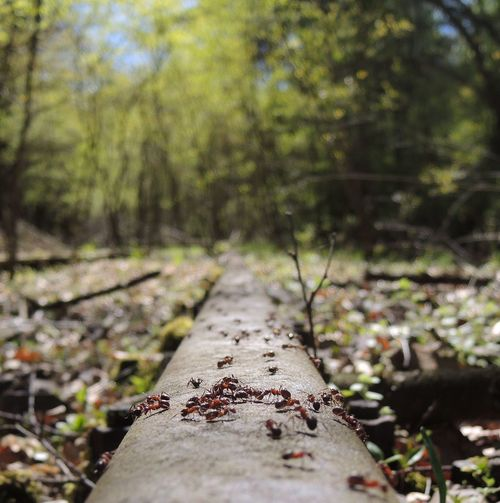 Nature Ants On The Go! Ants Train Tracks EyeEmNewHere