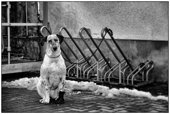 AUA !! Emotions The Look Animal Themes Blackandwhite Dog Domestic Animals Hurt Lawoe No People One Animal Outdoors Pets