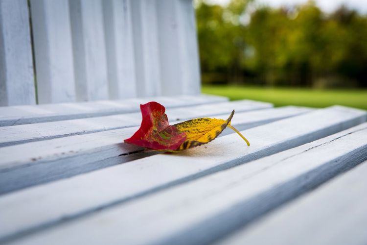 Together https://youtu.be/yoj2I6ZJLx8 Autumn Leaf Selective Focus Surface Level Tranquility Fallen Red Fallen Leaf Nature No People EyeEm Nature Lover Mllml Withyou Eye4photography  EyeEm Gallery Getting Inspired Canon Sognidacucire Playing With Thoughts (null)Altro, Oltre EyeEm Best Shots Togetherness Love 1+1=1