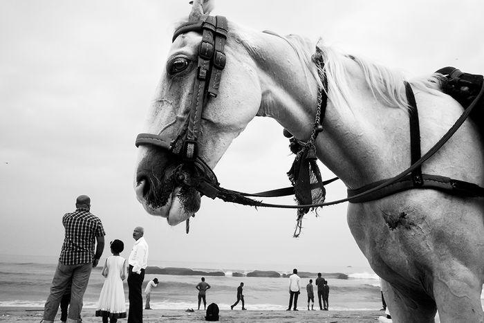 Marina Beach, Chennai, 2016 Beach Chennai Horse India Life People Street Street Photography Streetphoto_bw The Week On EyeEm Editor's Picks
